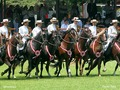 Thumb_caballos_paso_festv