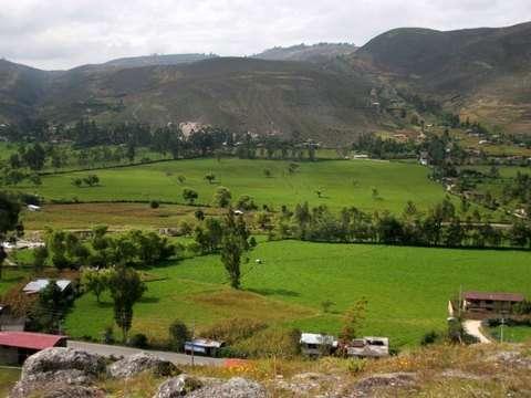 Cajamarca Clasica Oferta Especial