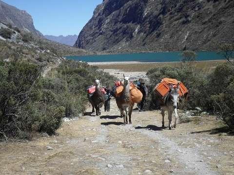 Caminata Llamas Experiencia Inolvidable 2d/1n Huaraz
