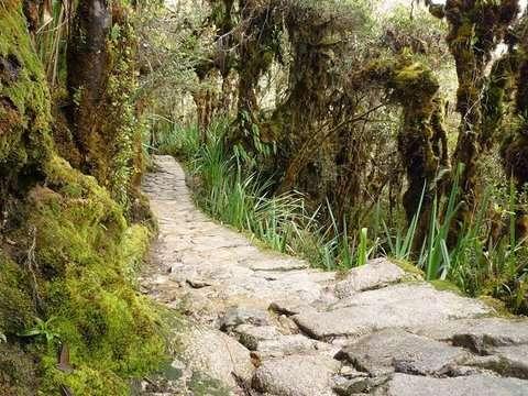 4d/3n Inka Jungle a Machupicchu - Solo Nacional