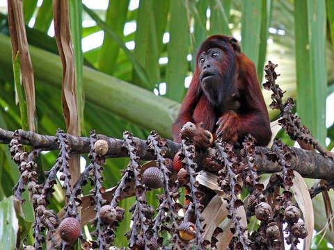 Excursión a la Reserva Nacional de Tambopata
