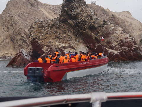 Full Day Paracas & Reserva